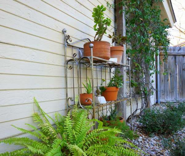 Give your plants a facelift!