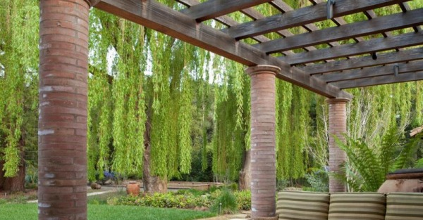 Weeping willow adds interest