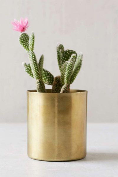 Brass succulent and cactus planter, golden flower pot #flowerpot #planter #succulent #cactus #decorhomeideas