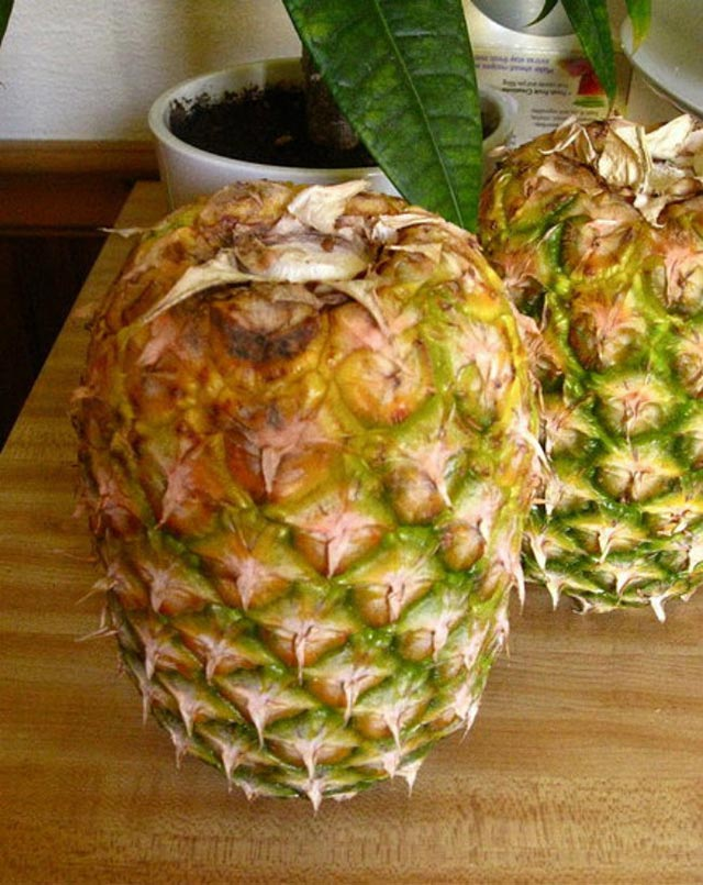 Storing pineapple tips #storage #food #tips #kitchen #decorhomeideas