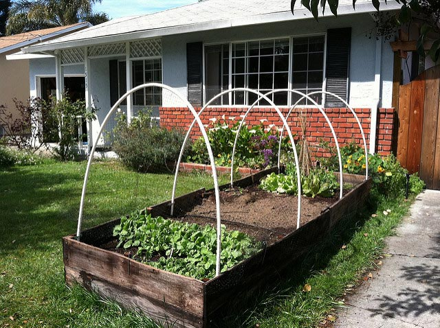 tidy contemporary raised beds