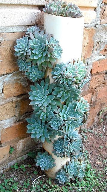 Pvc pipe succulent garden idea #diy #pvcpipes #homedecor #decoratingideas #pvc #decorhomeideas #succulents