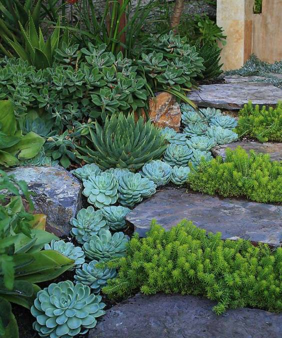 Stepping stone pathways garden idea with succulents #gardenideas #gardeningtips #landscaping #decorhomeideas #pathway
