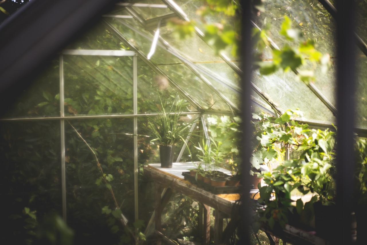 Inside a greenhouse