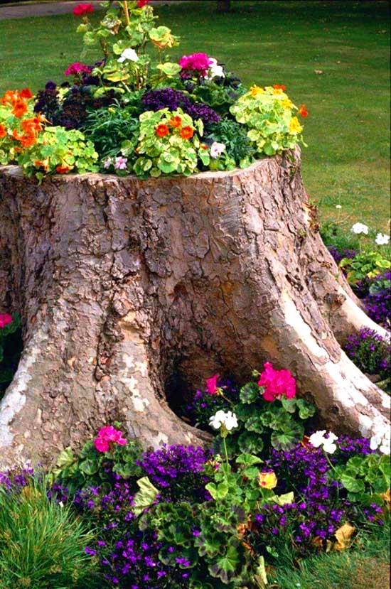 Repurposed Tree Stump Flower Bed #flowerbed #flowerpot #gardens #gardenideas #planter #gardeningtips #decorhomeideas