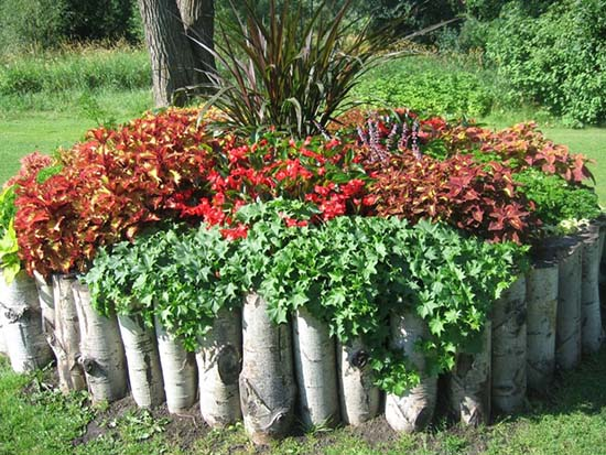 Flower bed ideas from birch logs #flowerbed #flowerpot #gardens #gardenideas #planter #gardeningtips #decorhomeideas