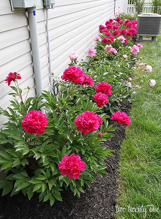 Flower bed design in line around the house #flowerbed #gardens #decorhomeideas