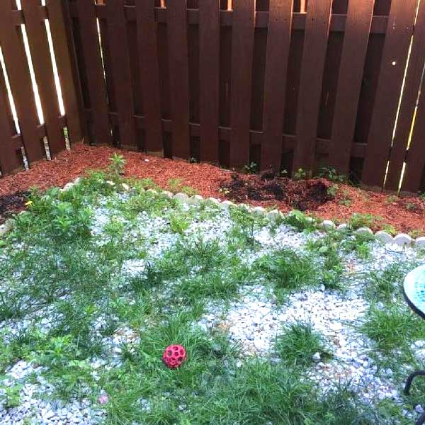 Weed backyard #diy #makeover #backyard