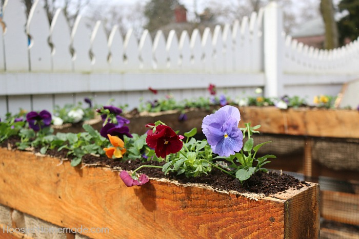 Flowers planted in wooden pallet compost bin #diy #compost #wooden #gardeningtips #backyard #decorhomeideas