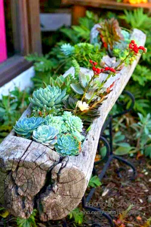 Old tree log succulent garden idea for rustic look. #succulent #succulentlove #gardens #gardening #gardenideas #gardeningtips #succulents #decorhomeideas #planter