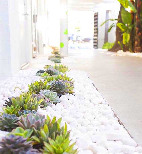 Succulent garden ideas with white pebbles and rocks. #succulent #succulentlove #gardens #gardening #gardenideas #gardeningtips #succulents #decorhomeideas