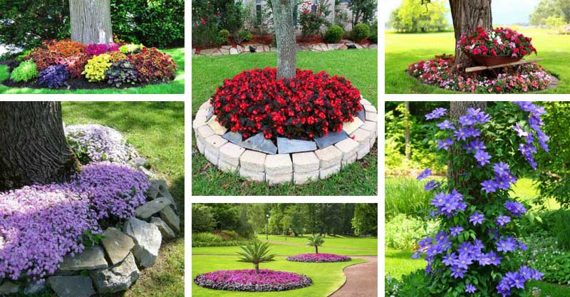 Pics Of Flower Beds Around Trees Flowers Healthy