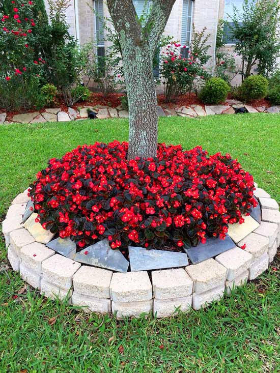 Raised flower bed around tree, with red flowers #flowerbed #flowerpot #planter #gardens #gardenideas #gardeningtips #decorhomeideas