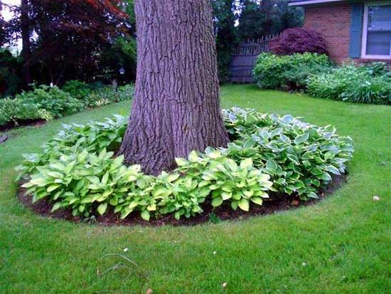 Around tree flower bed with hostas #flowerbed #flowerpot #planter #gardens #gardenideas #gardeningtips #decorhomeideas