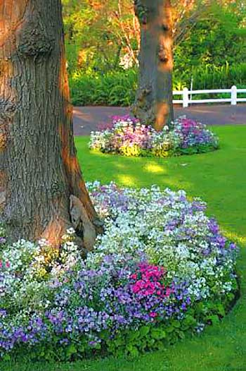 Big tree with flowers around #flowerbed #flowerpot #planter #gardens #gardenideas #gardeningtips #decorhomeideas