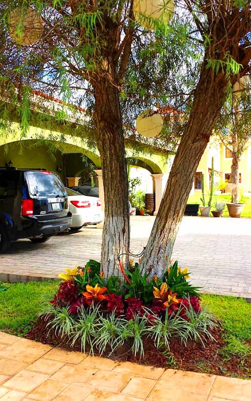 Flowers around a tree in beautiful flower bed #flowerbed #flowerpot #planter #gardens #gardenideas #gardeningtips #decorhomeideas