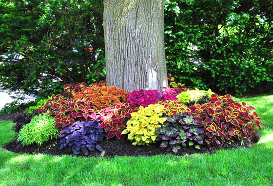 Colorful plants and flowers around tree #flowerbed #flowerpot #planter #gardens #gardenideas #gardeningtips #decorhomeideas