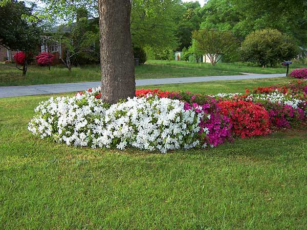 Flower ideas around tree #flowerbed #flowerpot #planter #gardens #gardenideas #gardeningtips #decorhomeideas