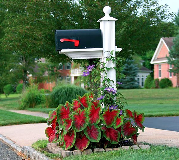 Flower bed around mailbox with Caladiums #flowerbed #mailbox #garden #curbappeal #flowers #decorhomeideas