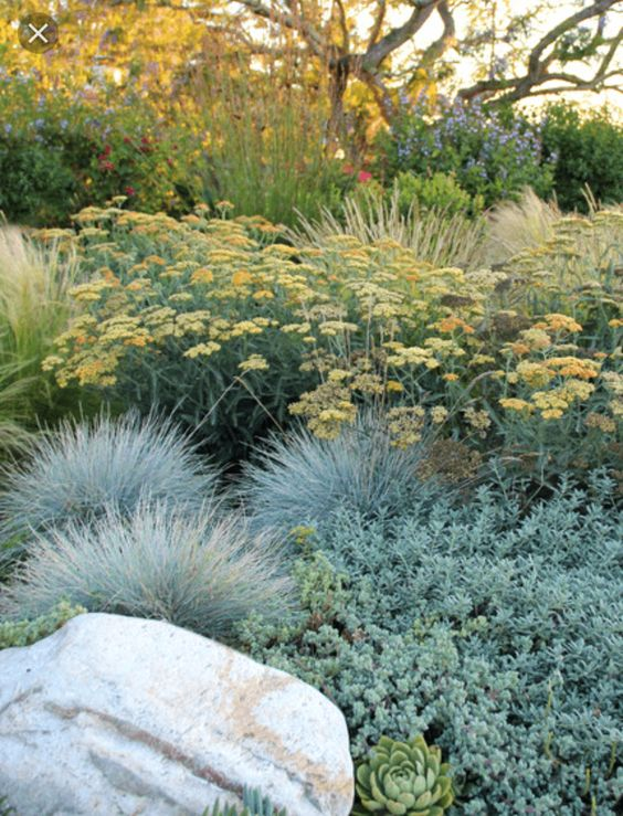 Flower bed low water #droughttolerant #landscaping #garden #decorhomeideas
