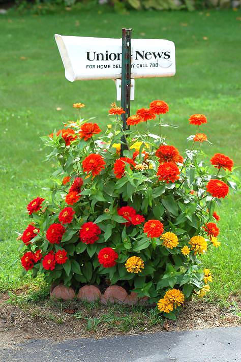 Small flower bed around mailbox #flowerbed #mailbox #garden #curbappeal #flowers #decorhomeideas