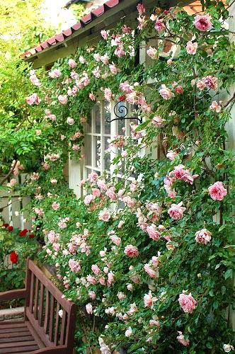 Cottage garden climbing roses layout #cottagegarden #cottage #garden #landscaping #backyard #flowers #decorhomeideas