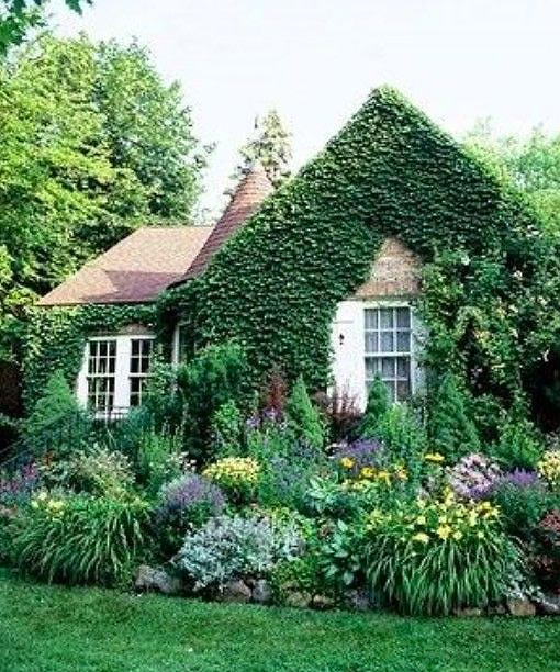 Lush green cottage garden #cottagegarden #cottage #garden #landscaping #backyard #flowers #decorhomeideas