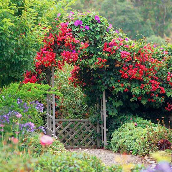 Red roses trellis cottage garden #cottagegarden #cottage #garden #landscaping #backyard #flowers #decorhomeideas