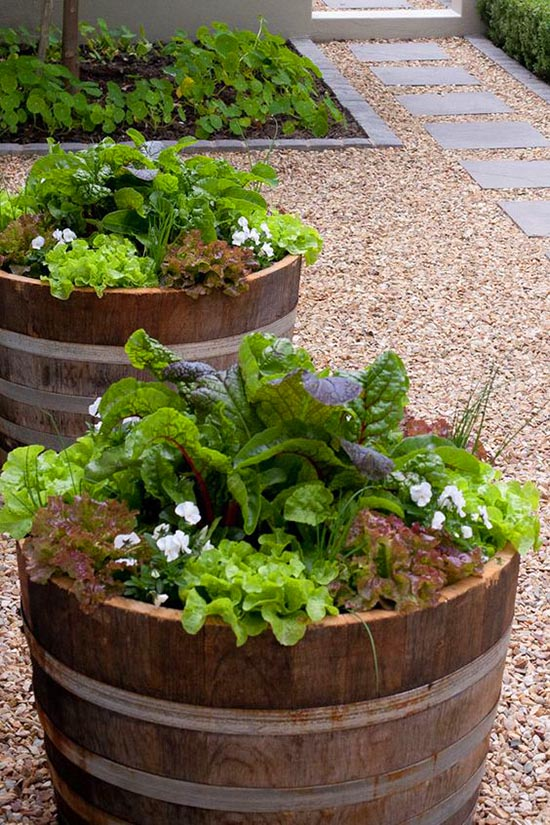 Wine barrel vegetable garden #diy #winebarrel #flowerplanter #repurpose #decorhomeideas