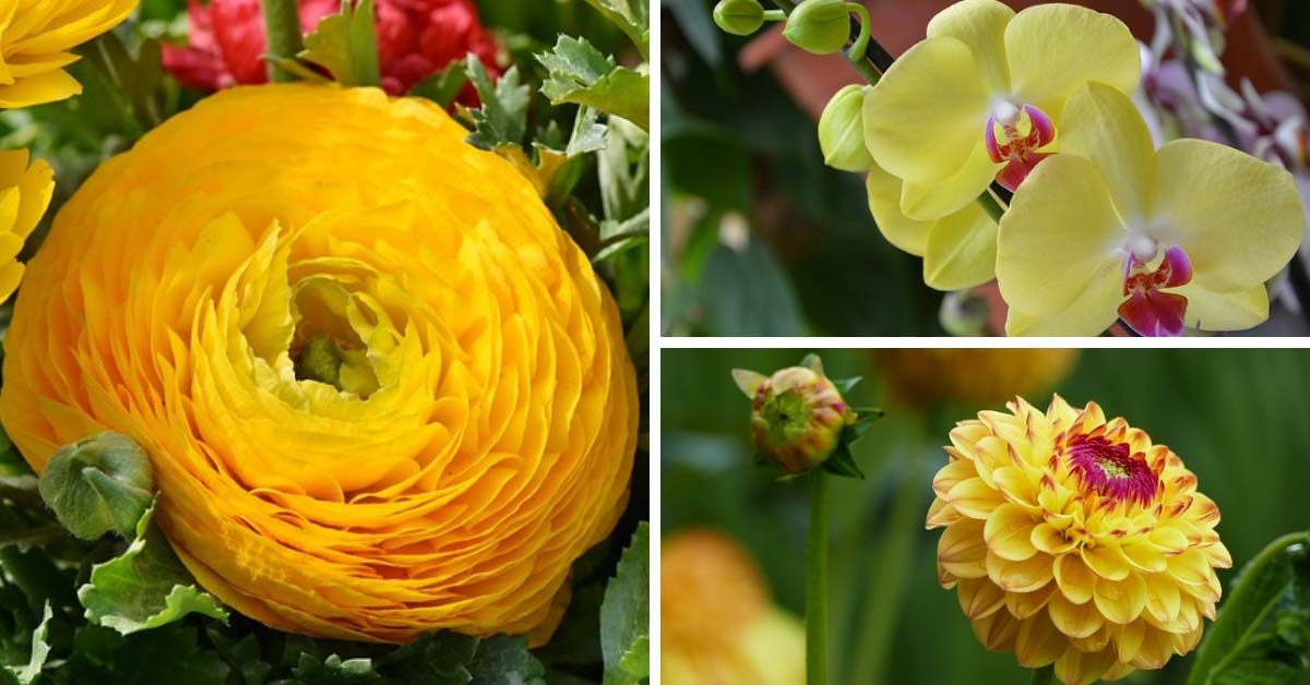 35 splendid types of yellow flowers you will fall in love with 35 splendid types of yellow flowers you will fall in love with decor home ideas mightylinksfo