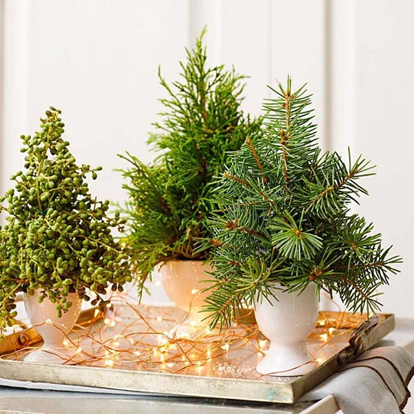 Tiny tannenbaums Christmas decor #Christmas #Christmasdecor #nature #natural #natureinspired #decorhomeideas