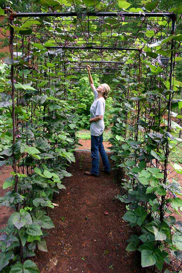 Bean Tunnel