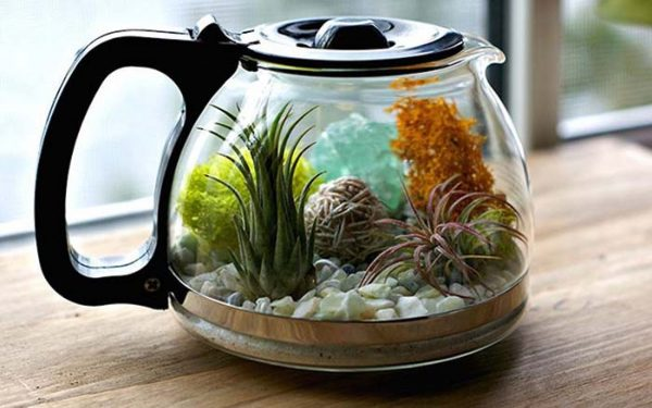 Create Terrarium From Old Coffee Pot #repurpose #reuse #kitchen #utensil #decorhomeideas