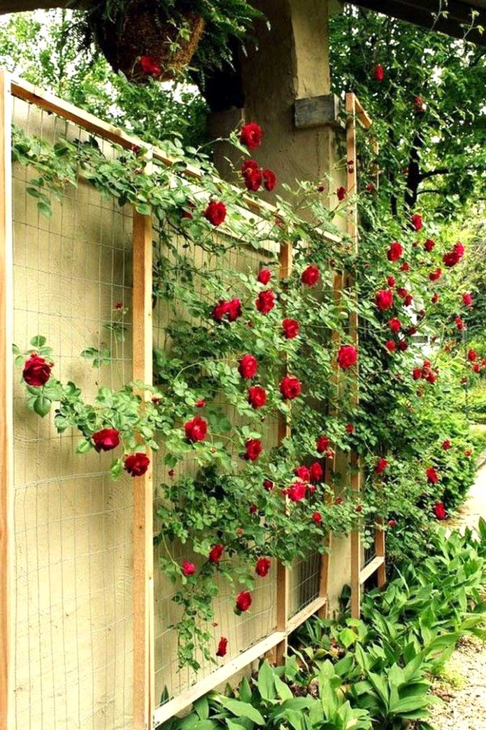 Trellis Ideas Around Fence #garden #trellis #decorhomeideas