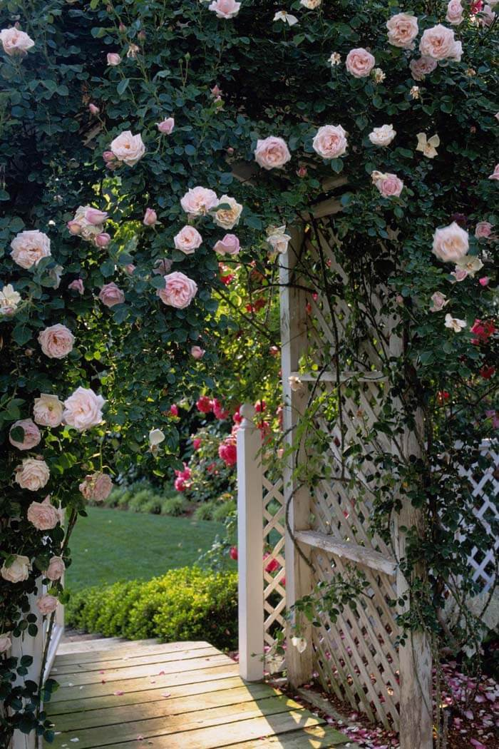 Arbor With Roses #garden #landscaping #decorhomeideas