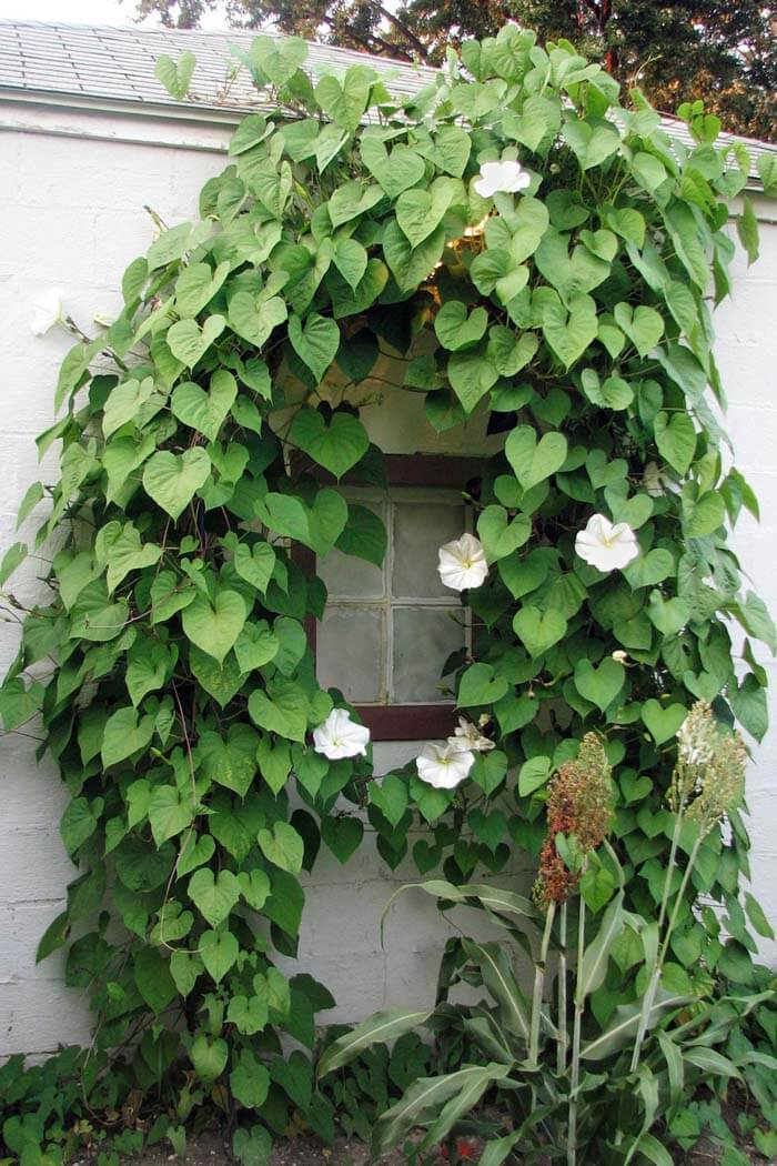 Window Surrounded With Greenery #garden #landscaping #decorhomeideas