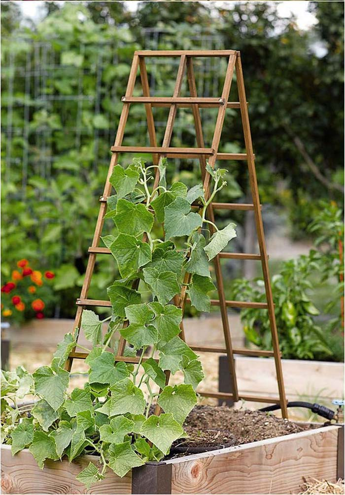 Awesome Diy Garden Trellis Ideas #garden #trellis #diy #decorhomeideas