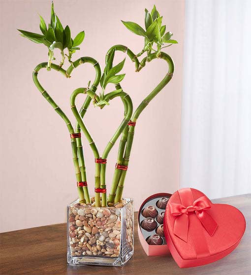 Heart Shaped Bamboo #valentine #gifts #girl #woman #decorhomeideas