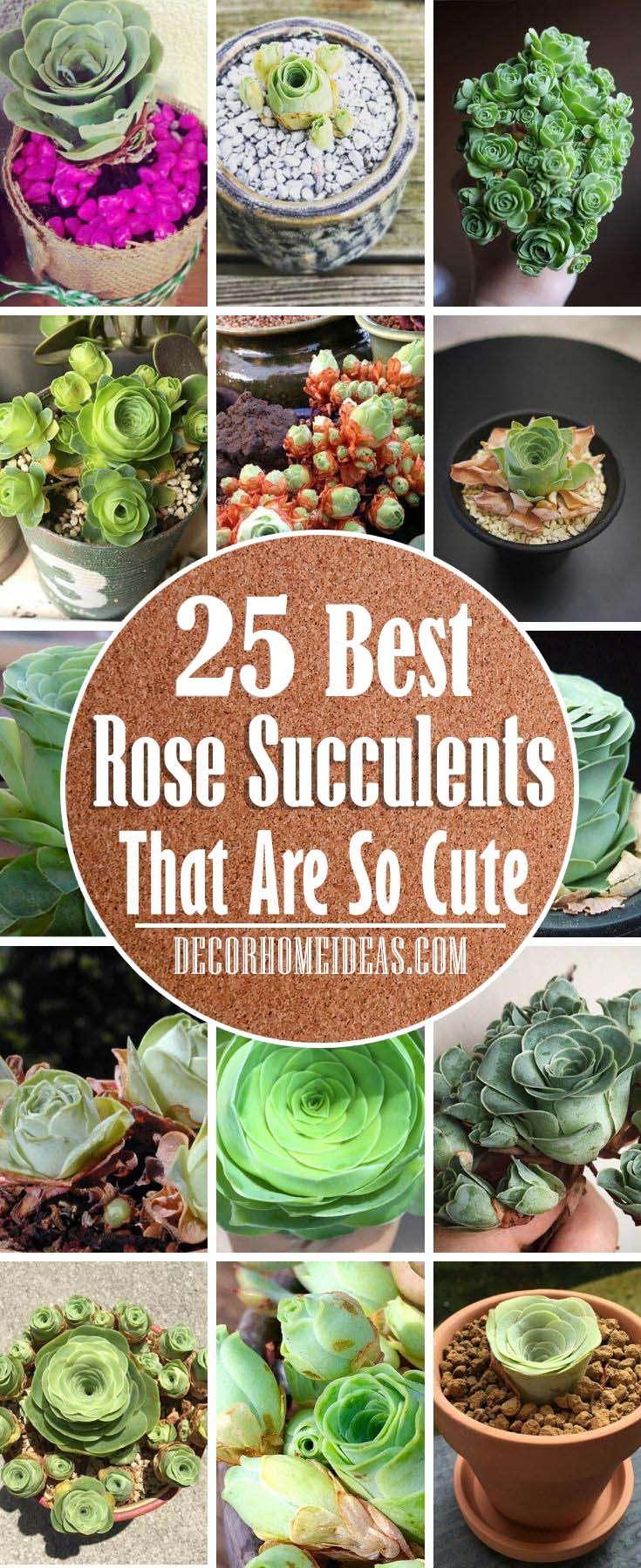 Best Rose Succulents. Are you in love with succulents? Well, these amazingly beautiful rose succulents that we have listed here are your dream come true #succulent #garden #rose #decorhomeideas