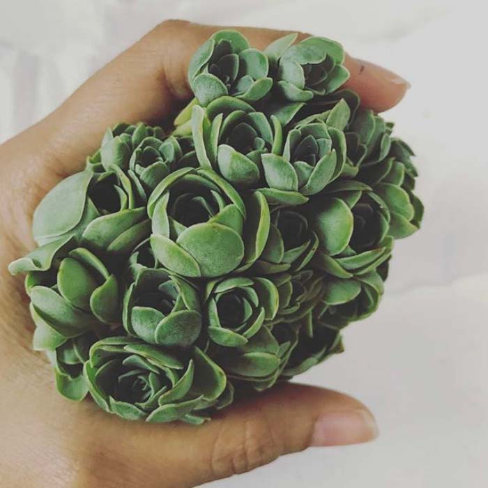 Bouquet Of Rose Succulents #succulent #garden #rose #decorhomeideas