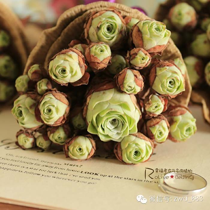 Bunch Of Rose Succulents #succulent #garden #rose #decorhomeideas