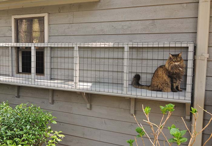 Diy Screened Cat Porches