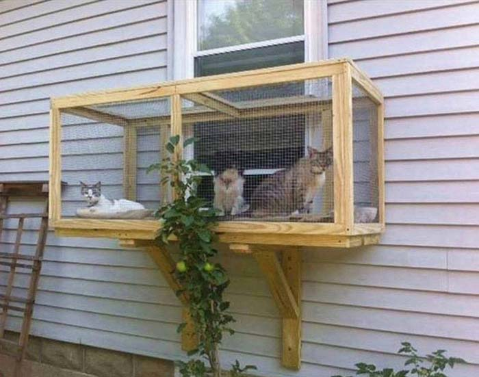 Screened Cat Porch Idea