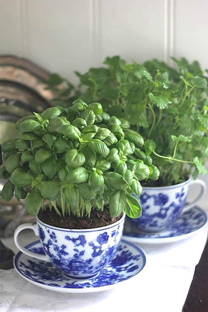 China Tea Cup Mini Herb Garden #diy #herbgarden #herbs #garden #ideas #decorhomeideas