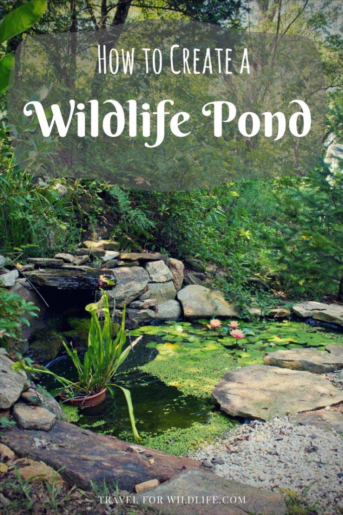 How To Create a Wildlife Pond #pond #diy #garden #waterfeature #decorhomeideas