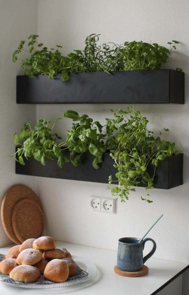 Kitchen Shelf Herb Garden #diy #herbgarden #herbs #garden #ideas #decorhomeideas