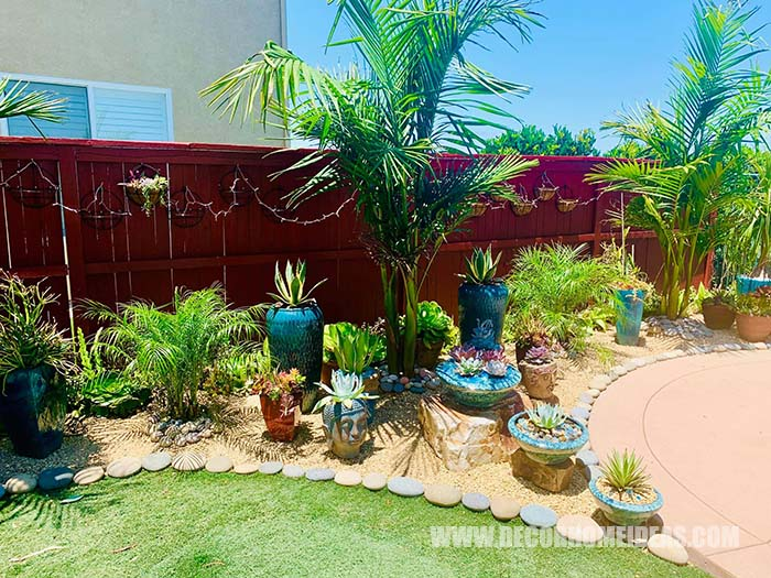 Backyard Succulent Garden