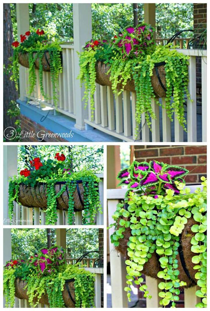 Brightly Colored Coleus and Geranium Porch Planters #diy #planter #flower #hanging #garden #decorhomeideas