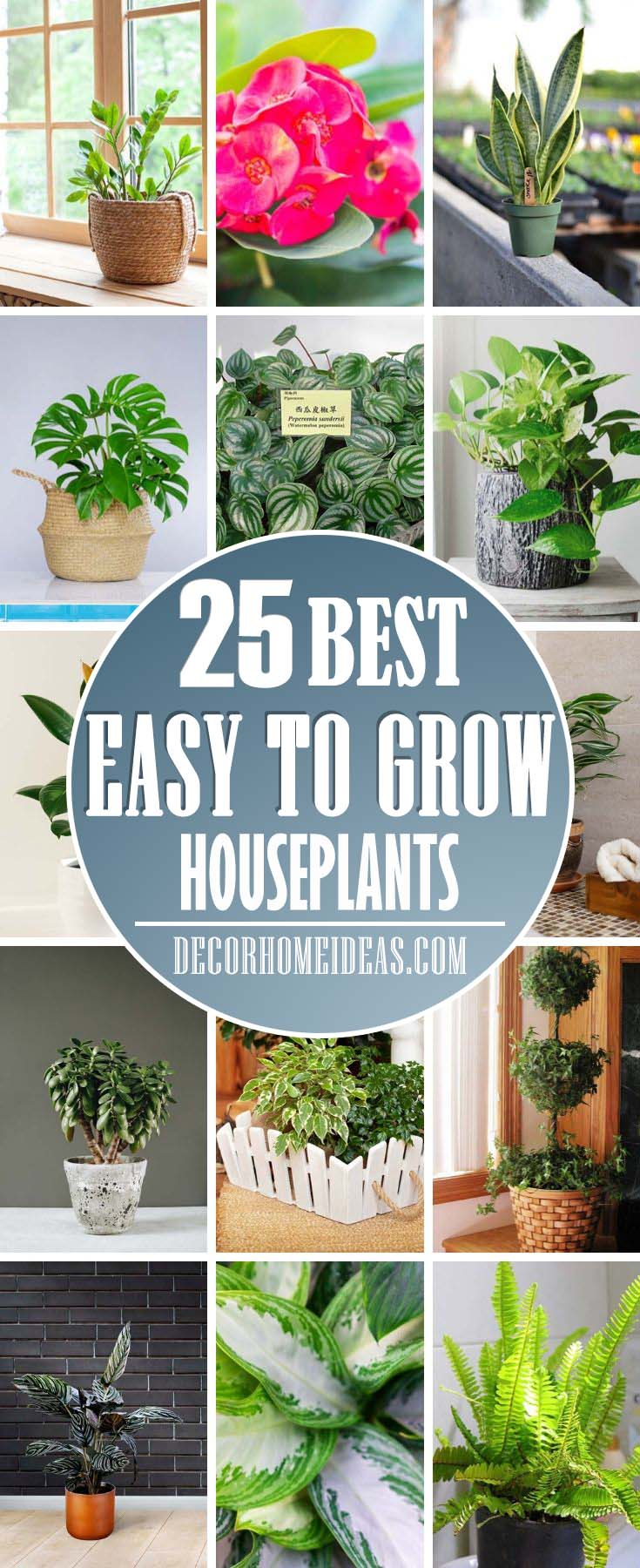 Easy To Grow Houseplants. Take a look at some fantastic, easy to grow houseplants you can raise yourself at home. These plants could be grown even by a beginner.  #houseplant #grow #easy #decorhomeideas