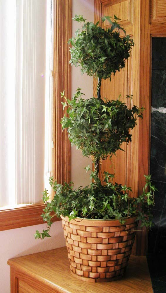 English Ivy #houseplant #grow #easy #decorhomeideas